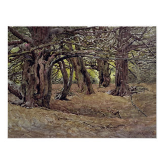 Yews in the Old Yew Wood Poster
