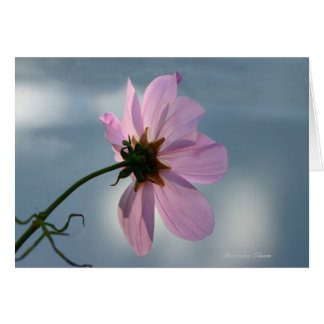 Yielding to Nature: Cosmos Card