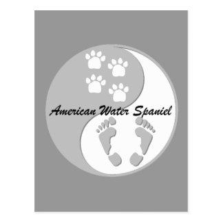 yin yang american water spaniel postcard