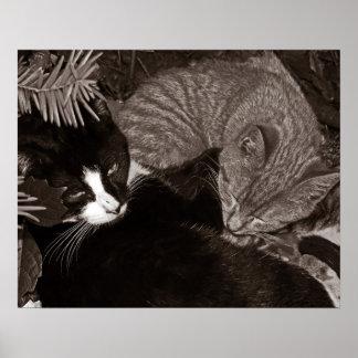 Yin Yang Cats Poster