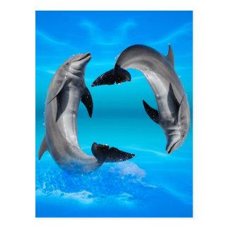 Yin Yang Dolphins Postcard