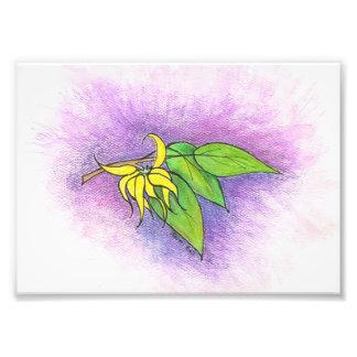 Ylang Ylang Illustration Photo Print
