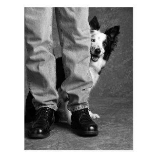 Yo y mi sombra - perro del collie tarjeta postal