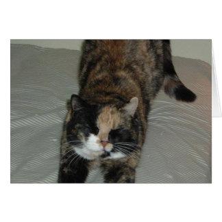 Yoga Calico Cat Card