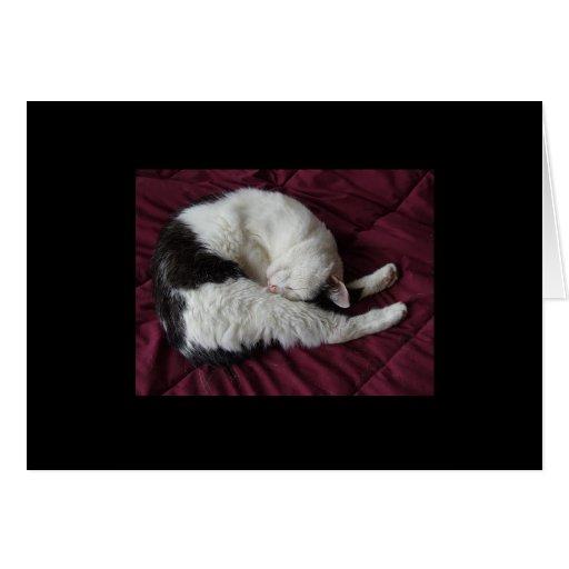 Yoga del gatito tarjeta pequeña