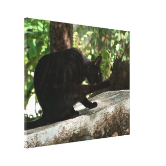Yoga del gato negro de BYOG Lona Envuelta Para Galerías