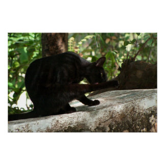 Yoga del gato negro de BYOG Poster