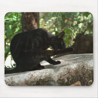 Yoga del gato negro de BYOG Tapete De Ratón