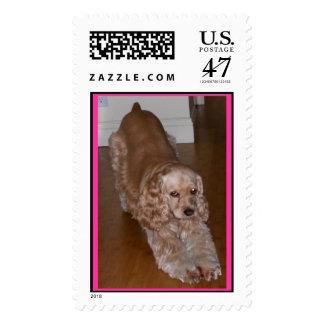 Yoga dog postage stamp