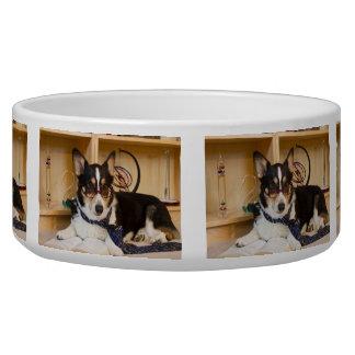 Yogi the Science Dog Bowl