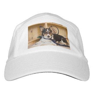 Yogi the Science Dog Hat