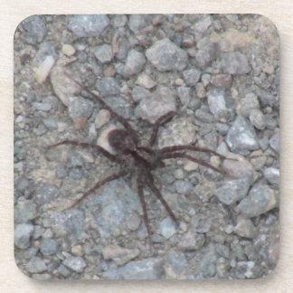 Yolly Bolly California Insects Arachnid Bug Fauna Beverage Coaster