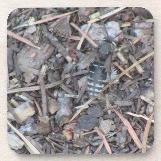 Yolly Bolly California Insects Arachnid Bug Fauna Coaster