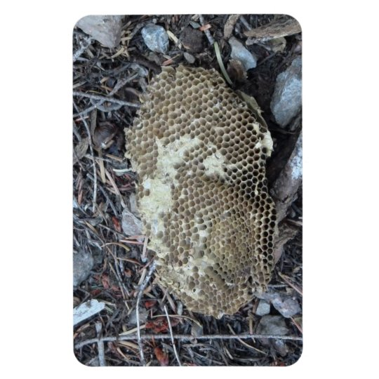 Yolly Bolly California Insects Arachnid Bug Fauna Magnet