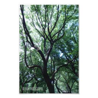 York City Tree Photo