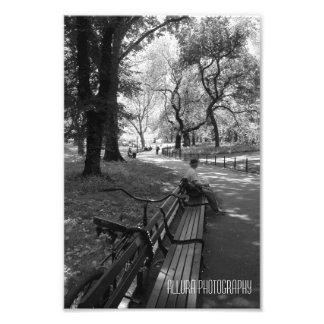 York Park Photo