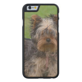 York Terrier Dog Carved® Maple iPhone 6 Case