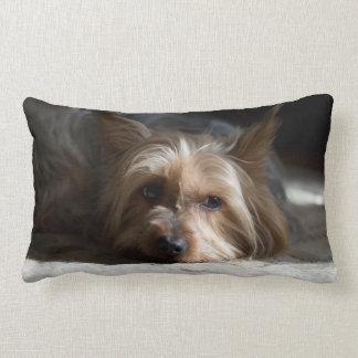 yorkhire / Silky Terrier lumbar pillow