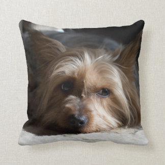 yorkhire / Silky Terrier throw  pillows