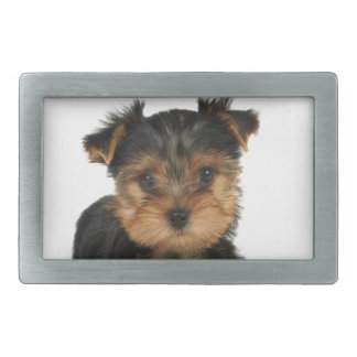 Yorkie agradable hebillas cinturón rectangulares