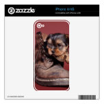 Yorkie and boot decal for iPhone 4S
