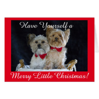 Yorkie and Friend Wearing Christmas Collars Card