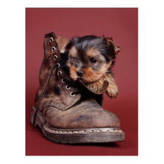 Yorkie boots postcard