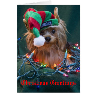 Yorkie Christmas Card