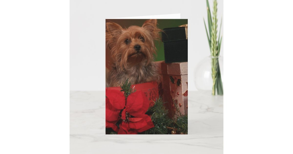 Yorkie Christmas Cards | Zazzle.com