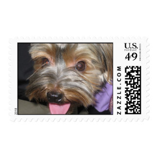 Yorkie Face Stamps
