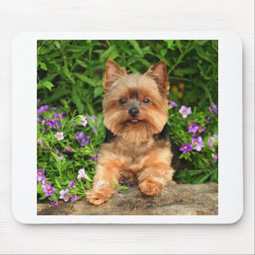 Yorkie flowers mouse pads