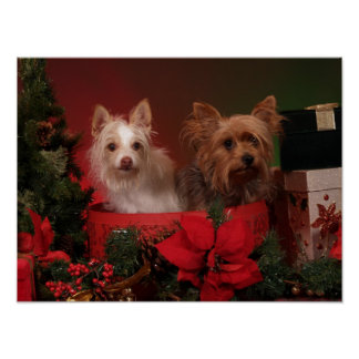 Yorkie Friends Christmas Poster