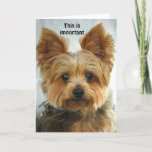 "Yorkie - Happy Birthday Card<br><div class=""desc"">Front - picture of a Yorkie Inside - Happy Birthday  PLEASE NOTE  ... . Text  on front and inside can be changed,  deleted,  repositioned ...  The font can also be changed,  resized etc ...  you can't hurt the original ...  be creative!</div>"