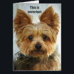 """Yorkie - Happy Birthday Card<br><div class=""""desc"""">Front - picture of a Yorkie Inside - Happy Birthday  PLEASE NOTE  ... . Text  on front and inside can be changed,  deleted,  repositioned ...  The font can also be changed,  resized etc ...  you can&#39;t hurt the original ...  be creative!</div>"""