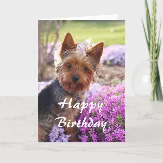 Yorkie Happy Birthday Card