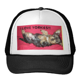 YORKIE HAT