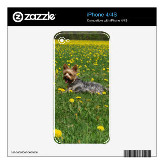 Yorkie in the spring decals for the iPhone 4