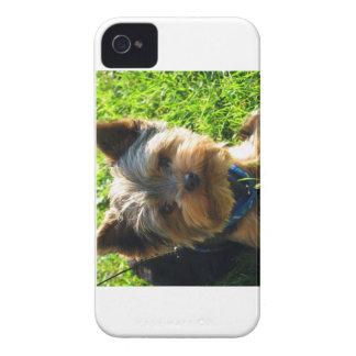 Yorkie iPhone 4 Carcasas