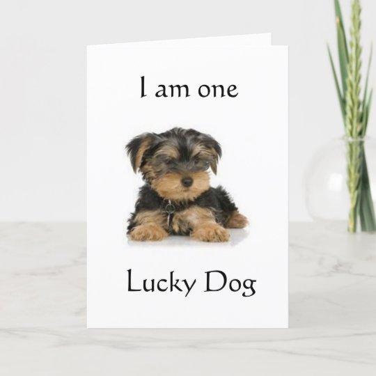 Yorkie Is One Lucky Dog Birthday Wishes Card Zazzle Com