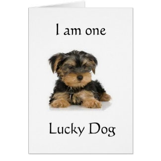 """YORKIE IS ONE LUCKY DOG"" BIRTHDAY WISHES CARD"