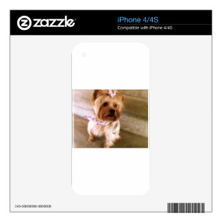 Yorkie Lovin Decal For iPhone 4S