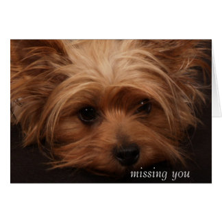 Yorkie Missing You Greeting Card