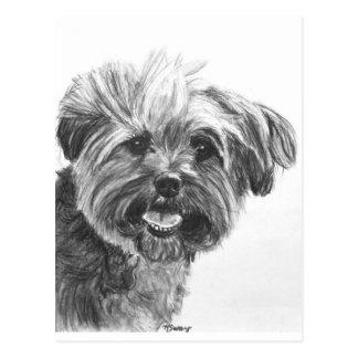 Yorkie Mix Charcoal Drawing Postcard