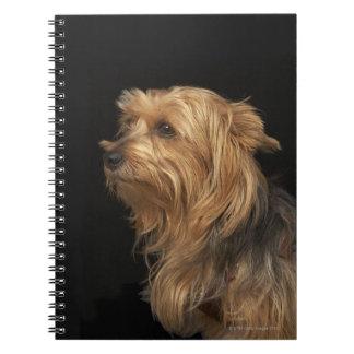 Yorkie negro y marrón dejó perfil en negro libro de apuntes