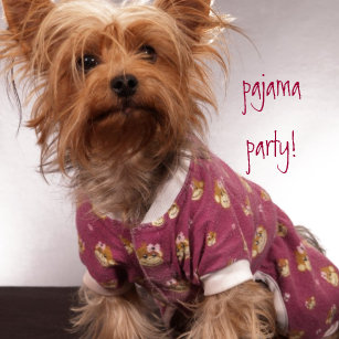 Parti Yorkie Gifts On Zazzle