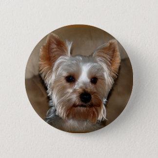 Yorkie Pinback Button