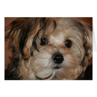 Yorkie~Poo Stationery Note Card