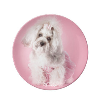 Yorkie-poo pink - pet photography dinner plate