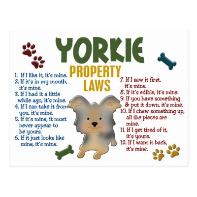 Yorkies Are People Too Postcard