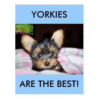 Yorkie Puppy Dog Lover Gifts Postcard